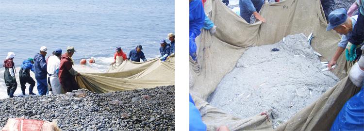 美浜町の地引網漁