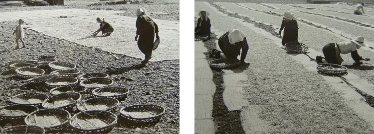 地引網漁の歴史